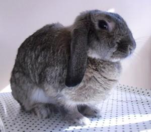 Wurde dieses Kaninchen gerettet? Oder ein anderes? Egal, denn: Keinen interessiert's! (Quelle: SpiritBunny, pixabay.com)